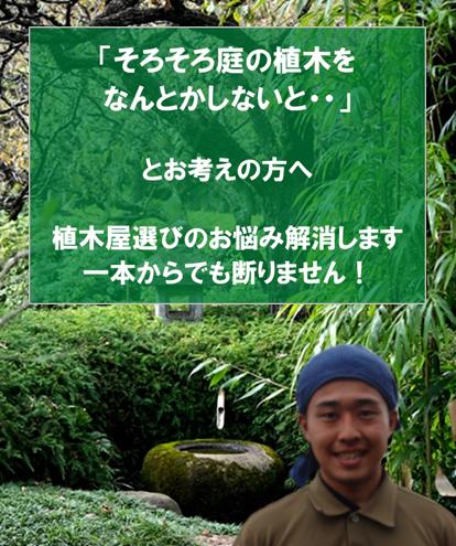 mainimage_sp